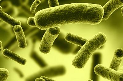 3152830 BacillusF tinhte cover 1 Trang chủ