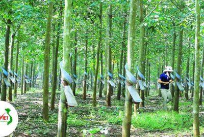 Công ty xử lý nước thải chế biến cao su ở Đồng Nai đat chuẩn Xuyên Việt