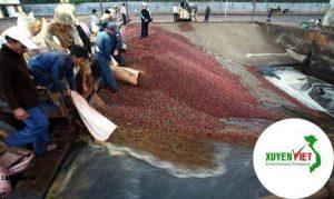 Hệ thống xử lý nước thải chế biến cà phê chuẩn – Môi Trường Xuyên Việt